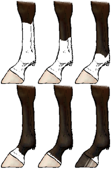 Horsemarkings legs-1-