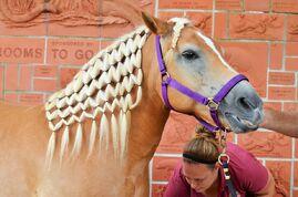 Horse-1443025 960 720-1-
