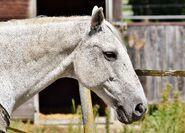 Horse-2694951 1920