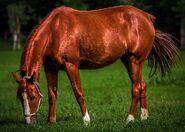 Horse-2602574 960 720-1-