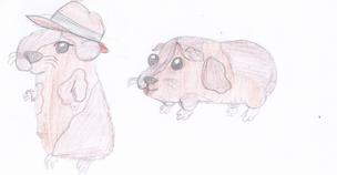 IzzyFan's guinea pig