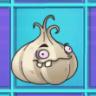 Garlic2a