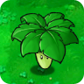 Umbrella Leaf2
