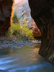 Narrows in Zion National Park