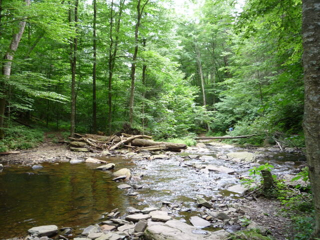 File:Forest River 6 by raindroppe.jpg