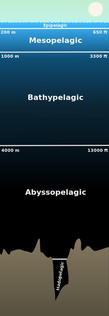 320px-Pelagiczone