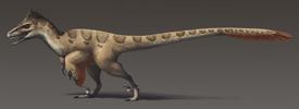 800px-Utahraptor ostrommaysorum update2
