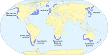Kelp forest distribution map