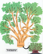 Indoeuropean language family tree