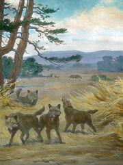 449px-Canis dirus