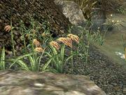 MW-flora-Saltrice