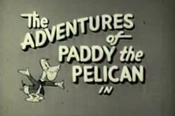 Paddy the pelican