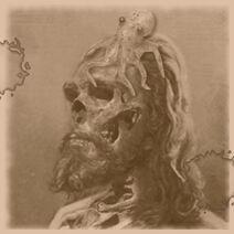 Zombie cephalopod