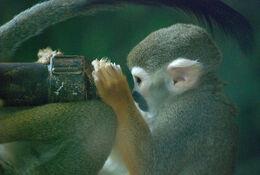 Monkey scientist