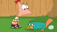 Phineas talks to Perry
