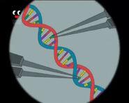 DNABasePairing