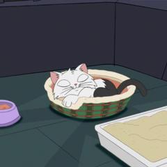 子猫は静かに眠っている。