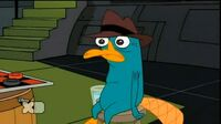 Perry alt