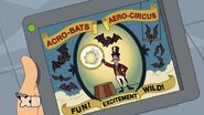 ...from a low-budget bat circus