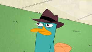 Perry staring at Doof