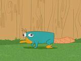 Perry, das Schnabeltier