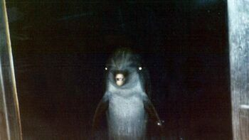 Creepy Dolphin