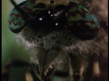 Butterfly Close Up in Wormy from SpongeBob SquarePants