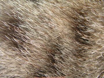 Cat Furs