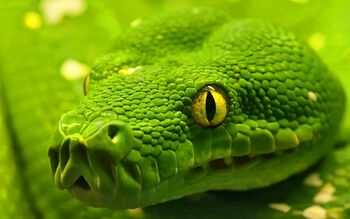 Close-Up-Green-Snake