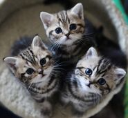 Cute-Three-Kitty