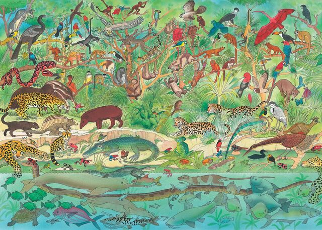 File:Rainforest Animals Illustration.jpg