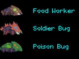 Cave Beetles