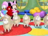 Daisy perd ses moutons