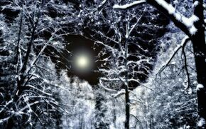 Paysage forêt nuit hivernale