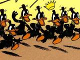 Canards pygmées