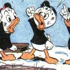 Riri, Fifi et Loulou dessinés par Carl Barks en 1956.