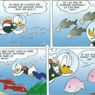 Différentes espèces de poissons.