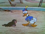 Salty et Donald Duck