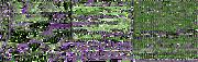 Rayman (Purple Water)