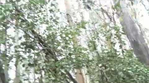 Alien Sighting in the Woods