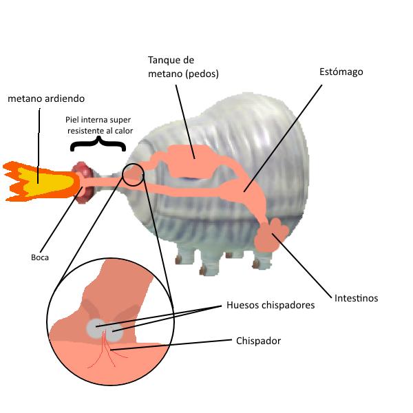 Anatomía teórica del verraco dragón | Wiki Piklopedia | FANDOM ...