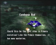 Reel5 Candypop Bud
