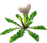 Seedingdandelion