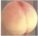 Mock bottom
