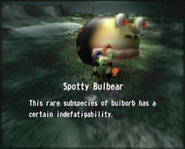 Reel22 Spotty Bulbear