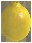 Gelbsaurier