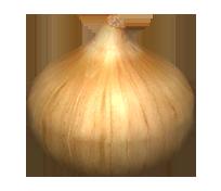 Onion Replica