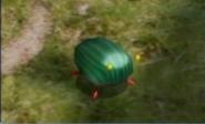 Scarabée iridescent Piklopédie