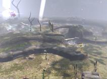 P2 Wald des Erwachens