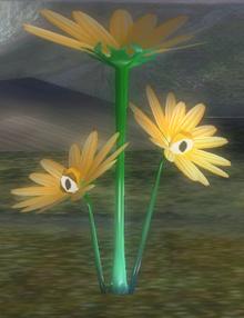 Chrysantème Rampant caché&